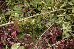 What to consider when clearing out your garden